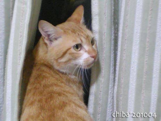 chiba15-04-20.jpg