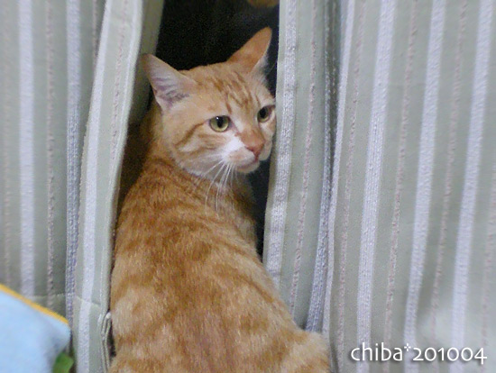 chiba15-04-23.jpg