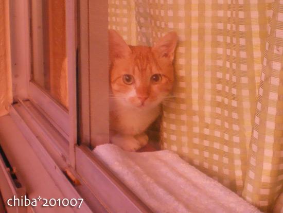 chiba15-04-66.jpg