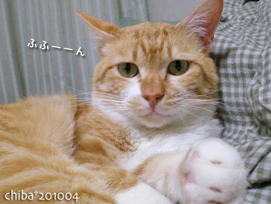 chiba15-04-71.jpg