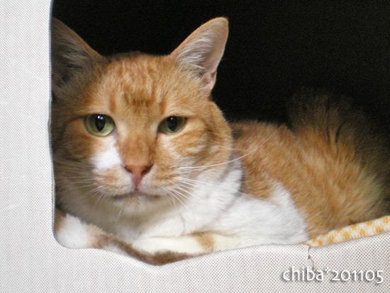 chiba15-05-10.jpg