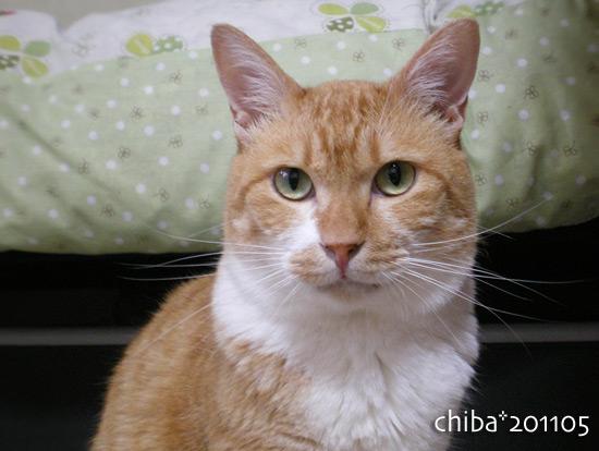 chiba15-05-15.jpg