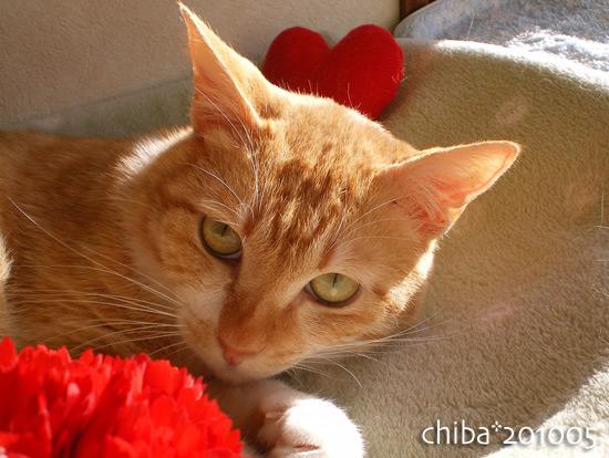 chiba15-05-23.jpg