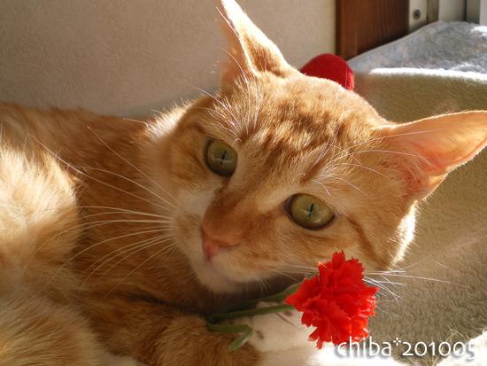 chiba15-05-30.jpg