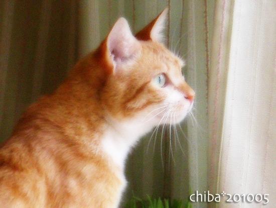 chiba15-05-37.jpg