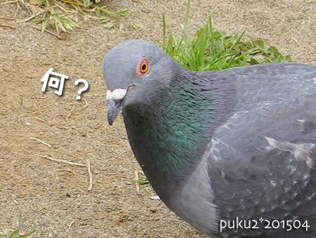 hato2015-04.jpg
