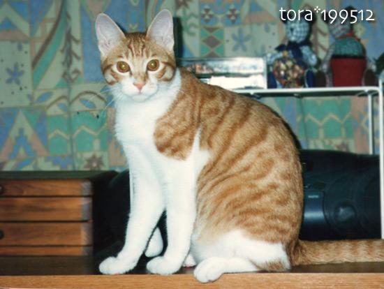 tora11-9-12.jpg