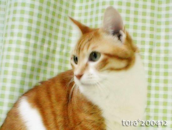 tora14-12-04.jpg
