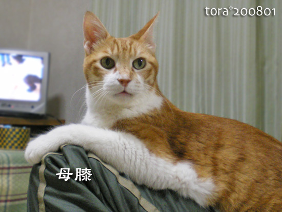 tora15-01-01.jpg
