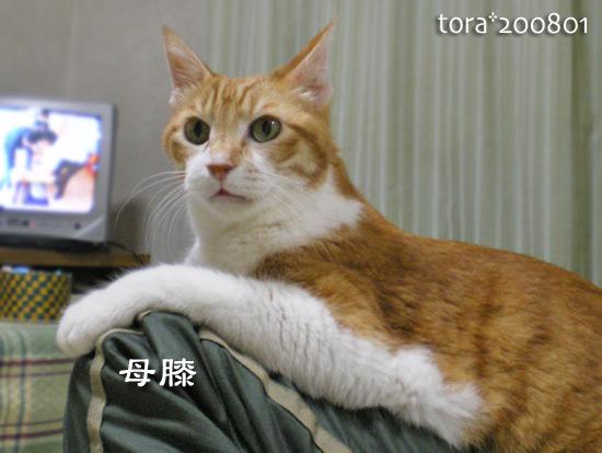 tora15-01-02.jpg