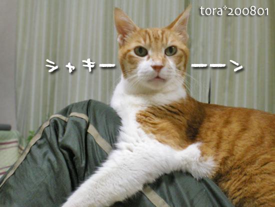 tora15-01-04.jpg