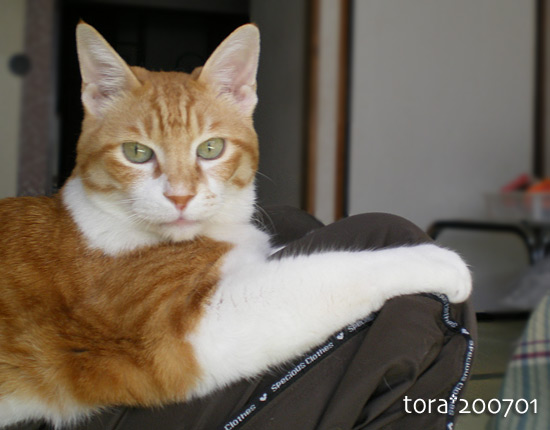 tora15-01-38.jpg
