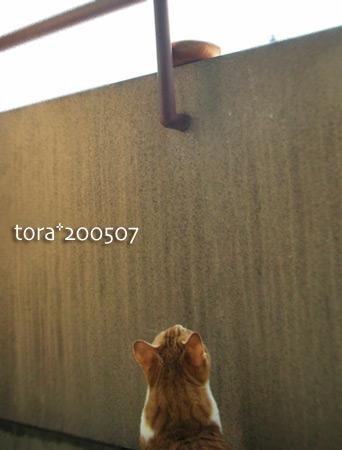 tora15-05-48.jpg
