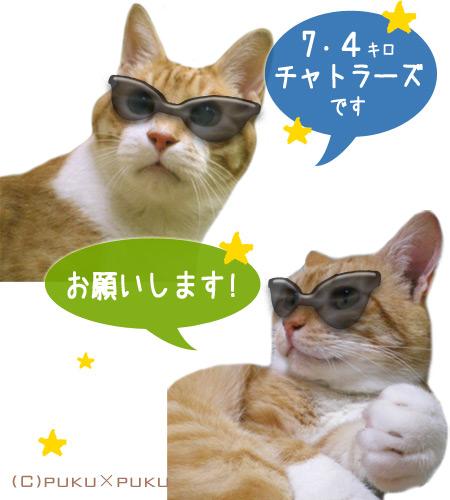 torachiba15-04-01.jpg