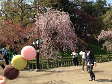 桜とお団子と