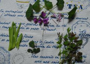 2015 若菜摘み