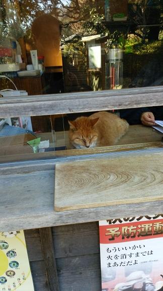 浄妙寺受付猫