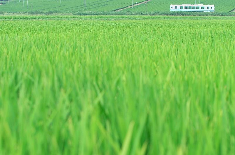 green green 2