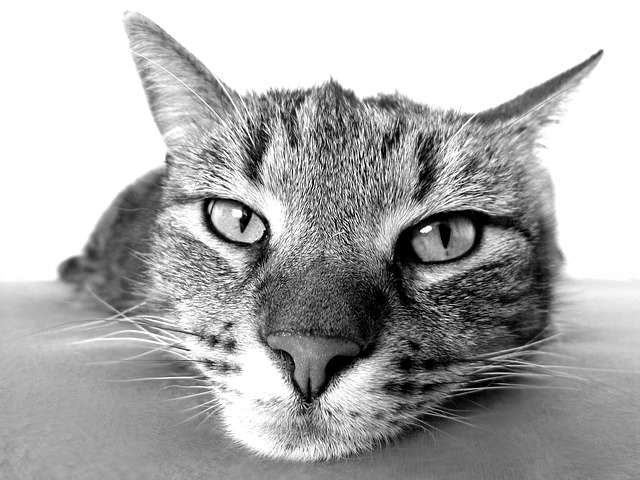 cat-98359_640.jpg