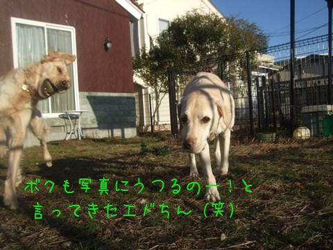 049_20150102114557a85.jpg