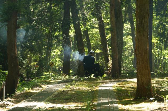 森林の中を走る、汽車