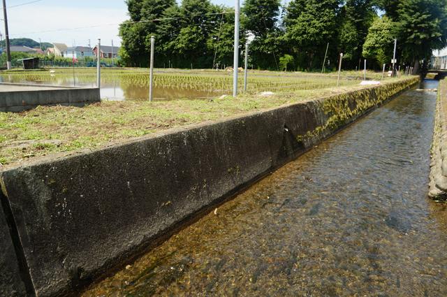 日野の上田用水