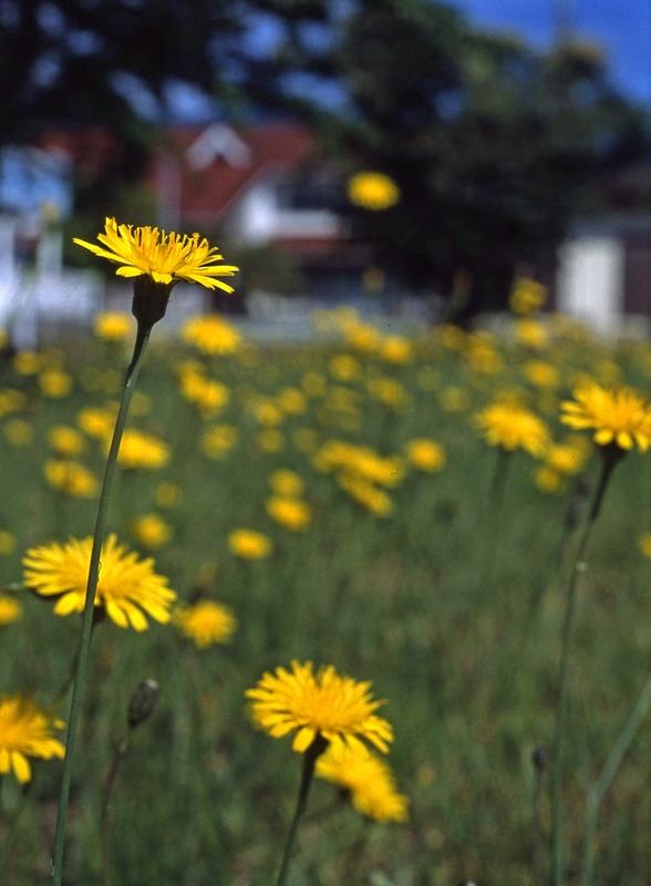 黄色の花6