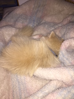足元で寝るココ