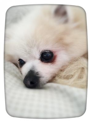 天使の寝顔ココ