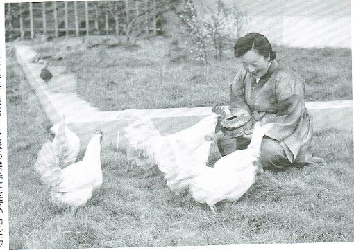 鶏と良子さま