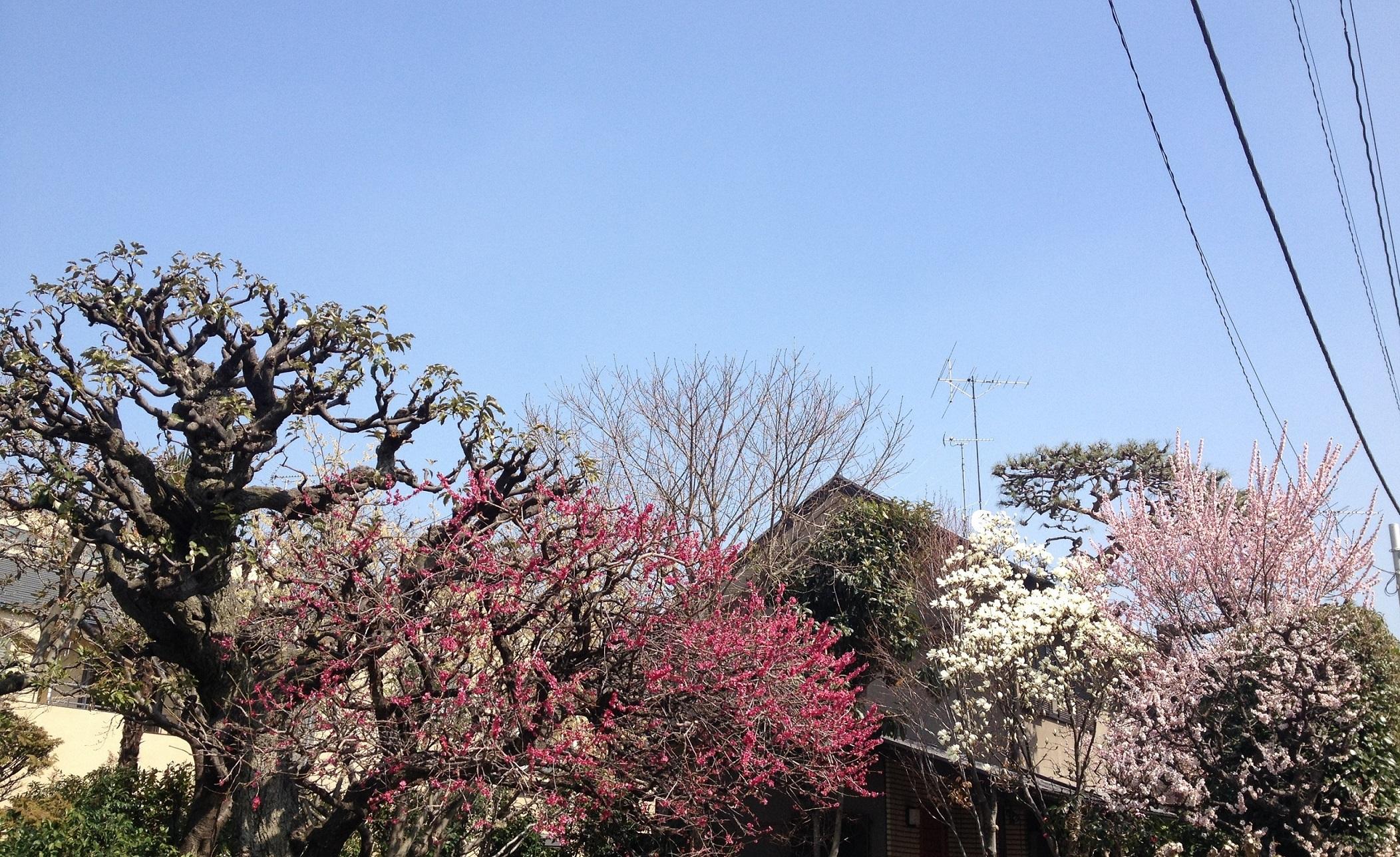 梅桜木蓮欅