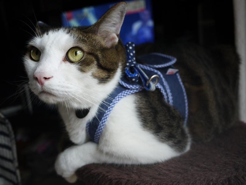 ゴロにゃん・猫用オリジナルハーネス・ダブルブロックタイプ
