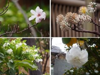 0329fumhanabana1.jpg
