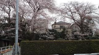 0329fumsakura14.jpg