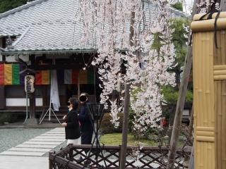 0329fumsakura9.jpg