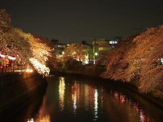 0331kawayozakura1.jpg
