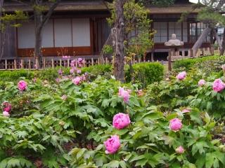 0412hirobumiteibotan2.jpg