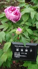 0412hirobumiteibotan5.jpg