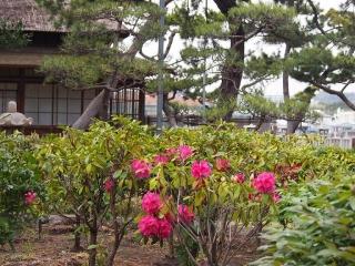 0412hirobumiteibotan8.jpg