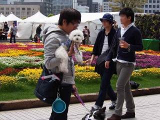 0418akarenfurawa-fesu11.jpg