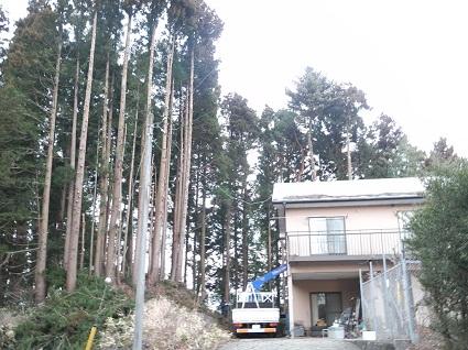 裏山伐採事変3