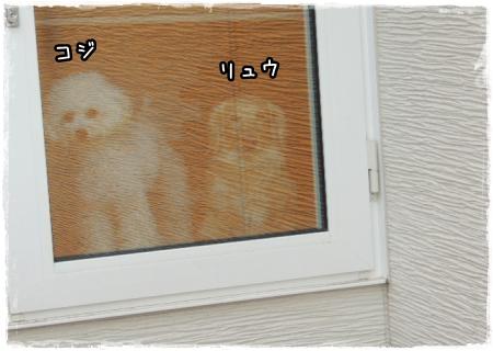 iko4.jpg
