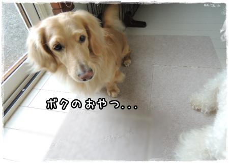suji5.jpg