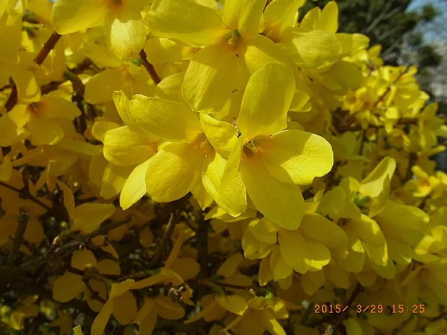 http://blog-imgs-71.fc2.com/s/a/c/sachimam0920/sachimam1503300004.jpg