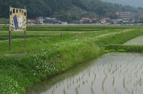 井原米 作り隊