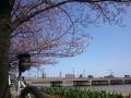 20150404_桜02