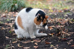 Park Cat Sakura-chan