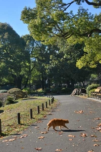 Ginger Cat Crossing The Path
