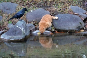 Tokyo Cat and Crow