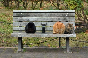 Bench Cats, Tokyo